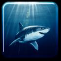 Requin Fond d'écran animé