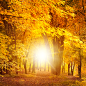 Herbst Live-Wallpaper