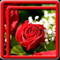 Rose Live-Wallpaper