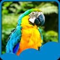 Parrots Live Wallpapers