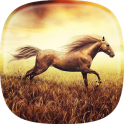 Horse Pictures Live Wallpaper