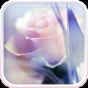 Rose Live Hintergrund