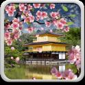 Sakura Hintergrundbilder