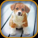 Cachorro Fondos Animados