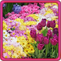 Garden Flowers Live Wallpaper