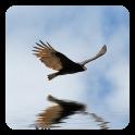 3D Bird Live Wallpaper