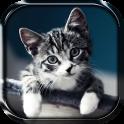 बिल्ली लाइव वॉलपेपर