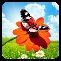 Frühling Schmetterlinge