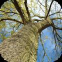 木のHD壁紙無料