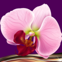 Orchid Photo Collage