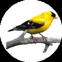 Bird Calls And Ringtones