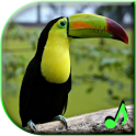 Bird Sounds Free Ringtones