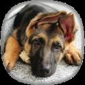 Schäferhund Hintergrundbilder