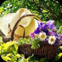 DIY Gardening Tips