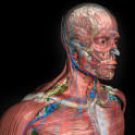 3D Human Anatomy Introduction Software