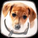 Cães Bonitos Papel de Parede