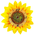 Sun Flower Clock Wallpaper