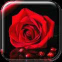 Scarlet Rose Live Wallpaper