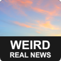 Weird Real News