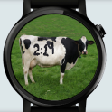 Cow Watch Face