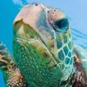 turtles wallpapers