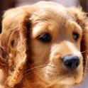 Fondo de pantalla de mascotas