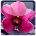 Nice Orchid Rest Live WP