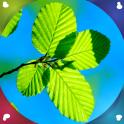 Leaf Live Wallpapers