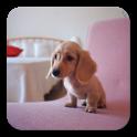 Q Dog Live Wallpaper