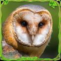 Furious Owl Simulator