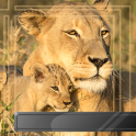 Animal Photo Frames
