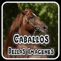 Caballos espanoles -imagenes de caballos finos