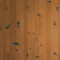 चींटी हंटर लाइव वालपेपर