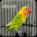 Masteran Lovebird Ngekek Panjang Offline