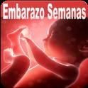 Semanas de Embarazo Guide