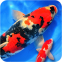 Koi Fish Wallpaper 3D