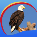 Eagle Live Wallpapers