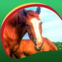 Horses Live Wallpapers