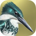 iBird Lite Free Guide to Birds