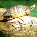 Turtles Jigsaw Puzzles