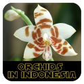 Orchids in Indonesia