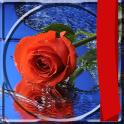 Roses Photo Frames