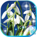 Snowdrops of Forest