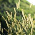 live wallpaper grass