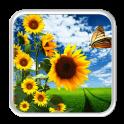 nature shiny sunflower