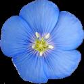Colorado Rocky Mountain Wildflowers