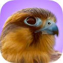 iBird Pro Birds North America