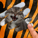 Scratch and guess the animal