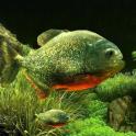 3D Fish Aquarium Wallpaper HD