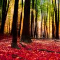 Autumn Landscape Wallpaper